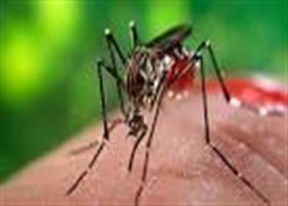 Dengue Treatment in Kaithal