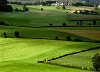 Agriculture Land For Sale in Jind