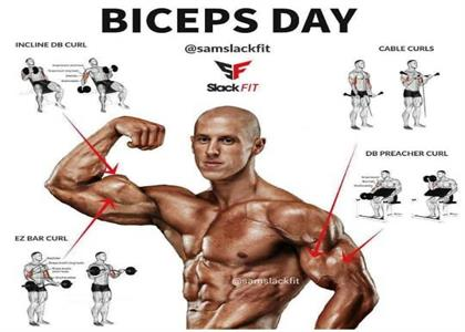 Best Biceps Exercise In Bahadurgarh